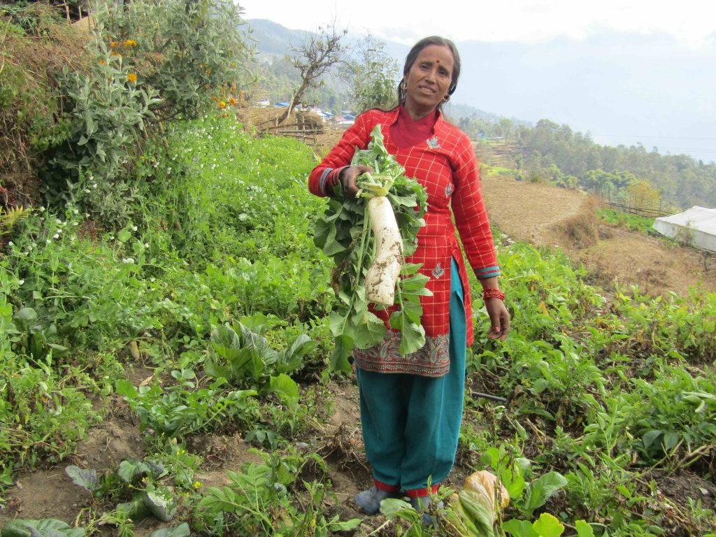Woman farmer in Nepal with daikon radish