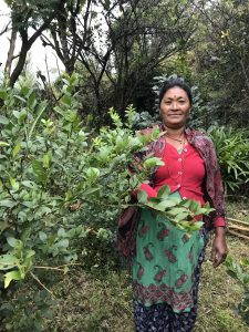 Woman with lemon sapling in Dolakha, Nepal