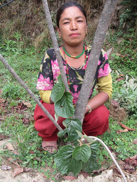 Woman with kiwi vine in rural Nepal