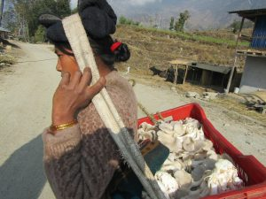 ETC women's group member taking a portion of her mushroom crop to sell
