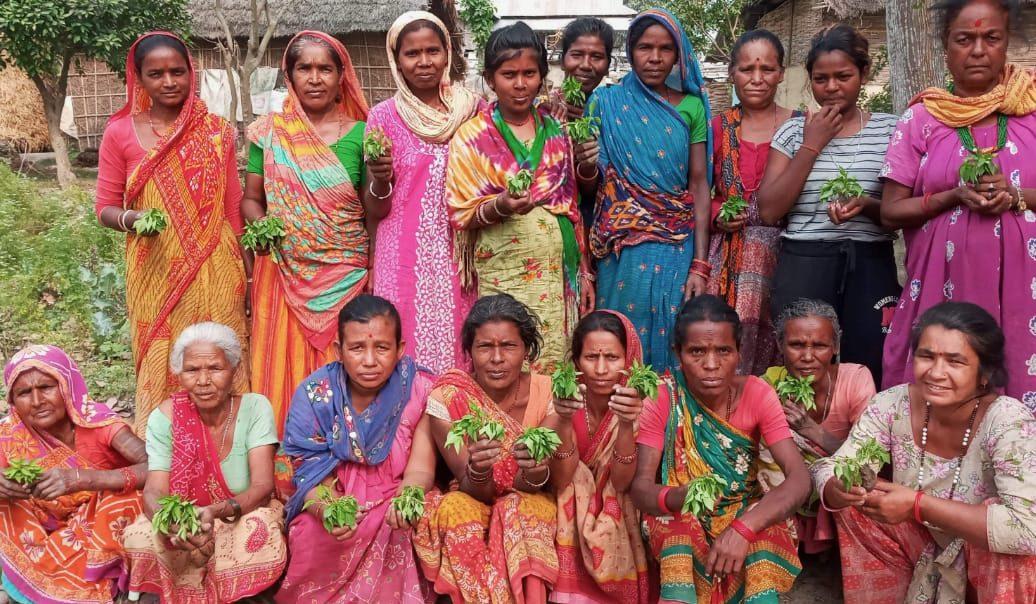 Women's group members receive kitchen garden seedlings